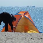 Idealny wiatrochron. Maj 2013 r. Gdy człowiek schroni się przed wiatrem, słońce grzeje jak na południu Europy