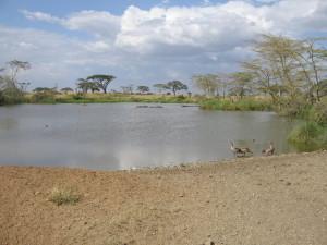 Wodopój w Afryce