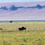 Na pierwszym planie nosorożec. W tle słoń.