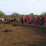 Cała wioska masajska przyjmuje gości.
