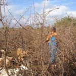Chłopcy zanim zostaną masajskimi wojownikami, doglądają zwierząt hodowlanych.
