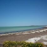 W Zatoce Spencera