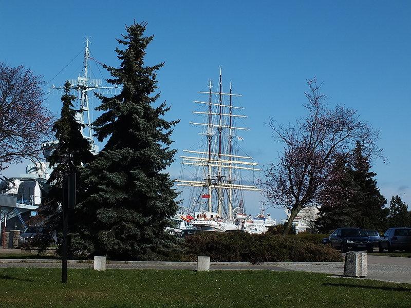 Dar Pomorza wiosną w Gdyni w 2016 roku. Maszty Daru Pomorza między drzewami