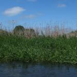 Na odcinku od Jajkowa do samej Brodnicy, Bagienna Dolina Drwęcy jest obszarem specjalnej ochrony ptaków