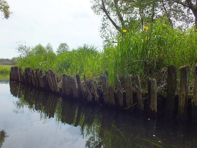 Ujście kanału do Drwęcy.
