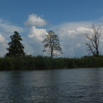 Trzy dzrewa na brzegu Pilicy: łyse, mniej łyse i mocno liściaste.Te drzewa dają do myślenia. I nie o łysienie tu chodzi, a o upływ czasu i geny.