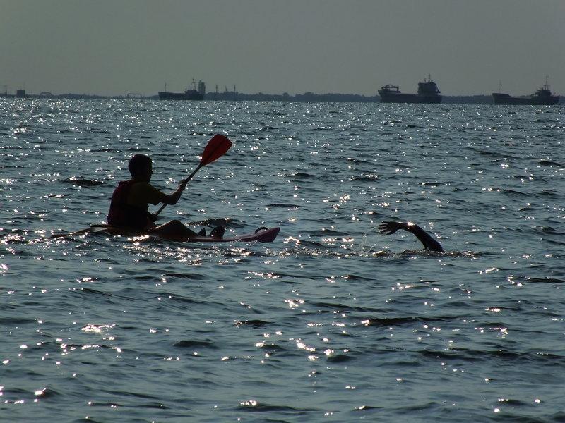 Pływacki w piance długi dystans wzdłuż wybrzeża