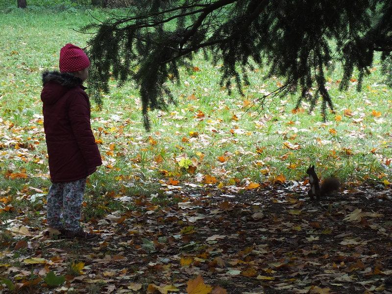 W Lzienkach Królewskich dzieci zbierają kasztany a wiewiórki wyłudzaja od nich orzeszki