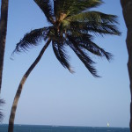 Styczeń 2009 roku. Pod Mombasą.. Palmy, jachty i słońce.