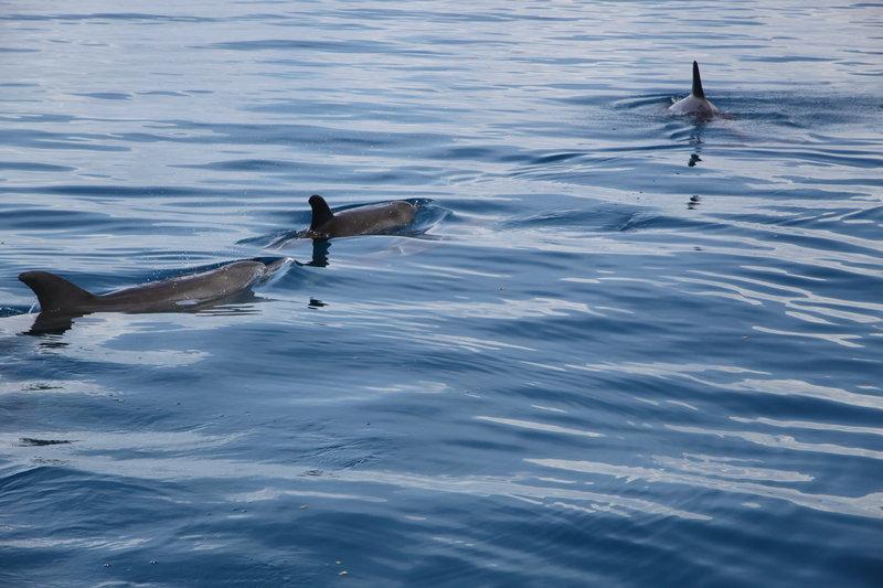 Delfiny odpływają