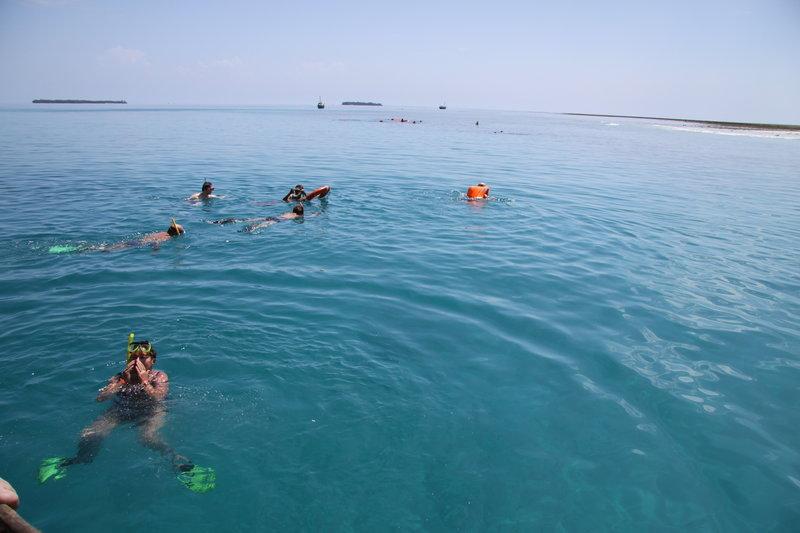 Oglądacze rafy koralowej
