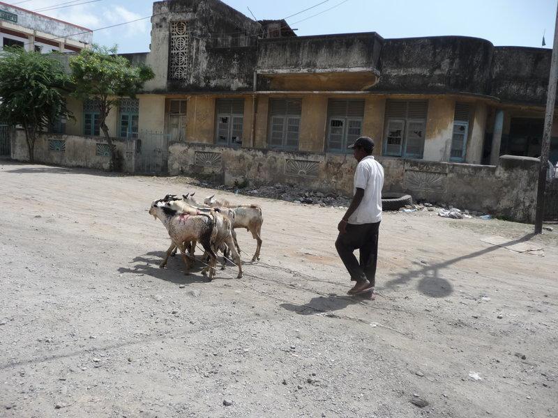 Mombasa w 2009 roku, niemal milionowe miasto. Mimo to można spotkać kozy na ulicy