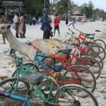 Zaparkowany wielbłąd pomiędzy rowerami