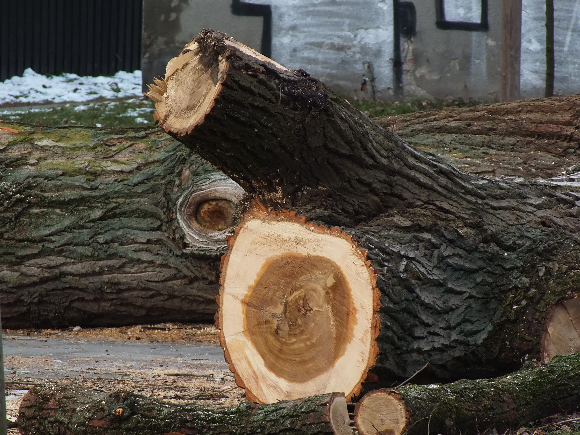 Było zycie przed 2018 rokiem. Ścięli drzewo na Mokotowie Dolnym Codziennie ścinaja w Polsce drzewa i podcinaja nam skrzydła.