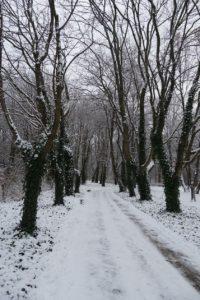 Pojawiła się zima 2021 w Łazienkach Królewskich w Warszawie